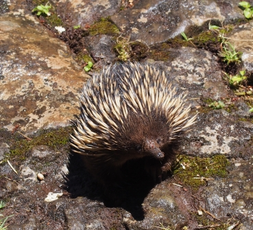 Brim Brim Bed and Breakfast Echidna